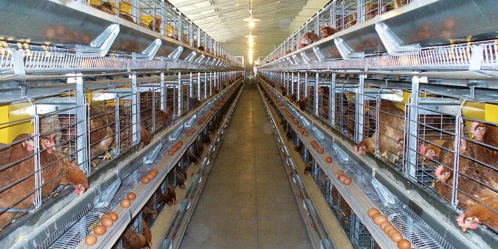 Reti per gabbie di allevamento industriali