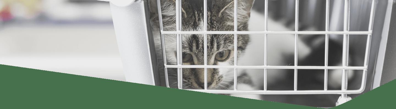 Allevamento e Pet
